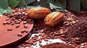 مواد اولیه شکلات داغ برای تولید عمده
